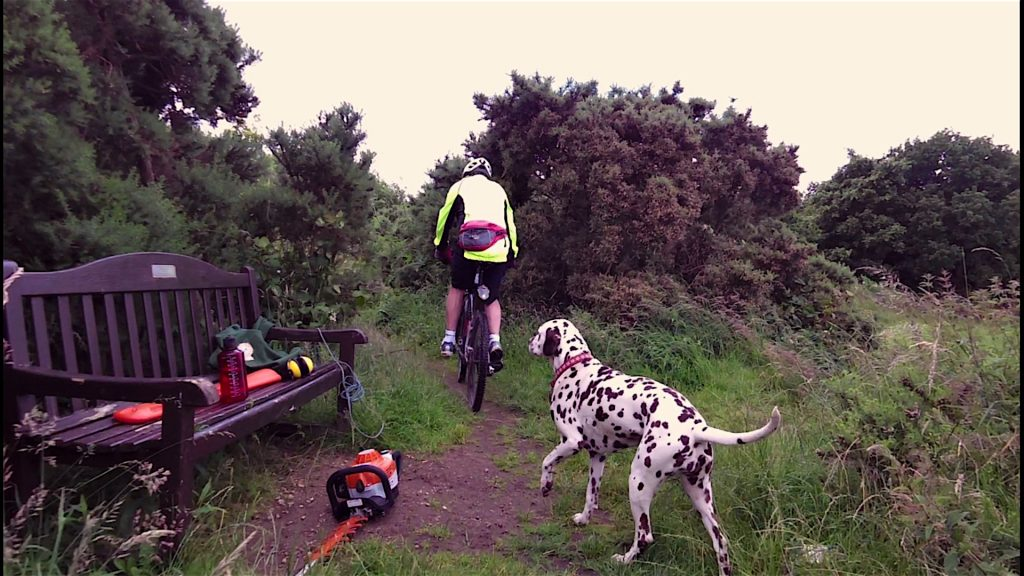 Not often you see a Dalmatian equipped with a Chainsaw!